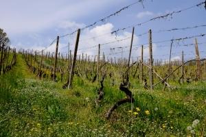 ブガンツァ│ネッビオーロ・ダルバ・ジェルボーレ 2014│BMO輸入ワイン - イタリア - ピエモンテ - 自然派ワイン・ビオワインの仕入ならお任せ